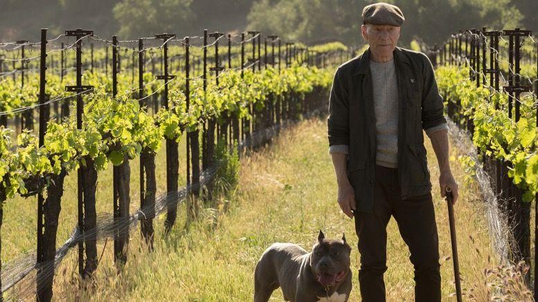 picard-numberone-vineyard.jpg
